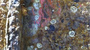 barnacles-Jerram.jpg